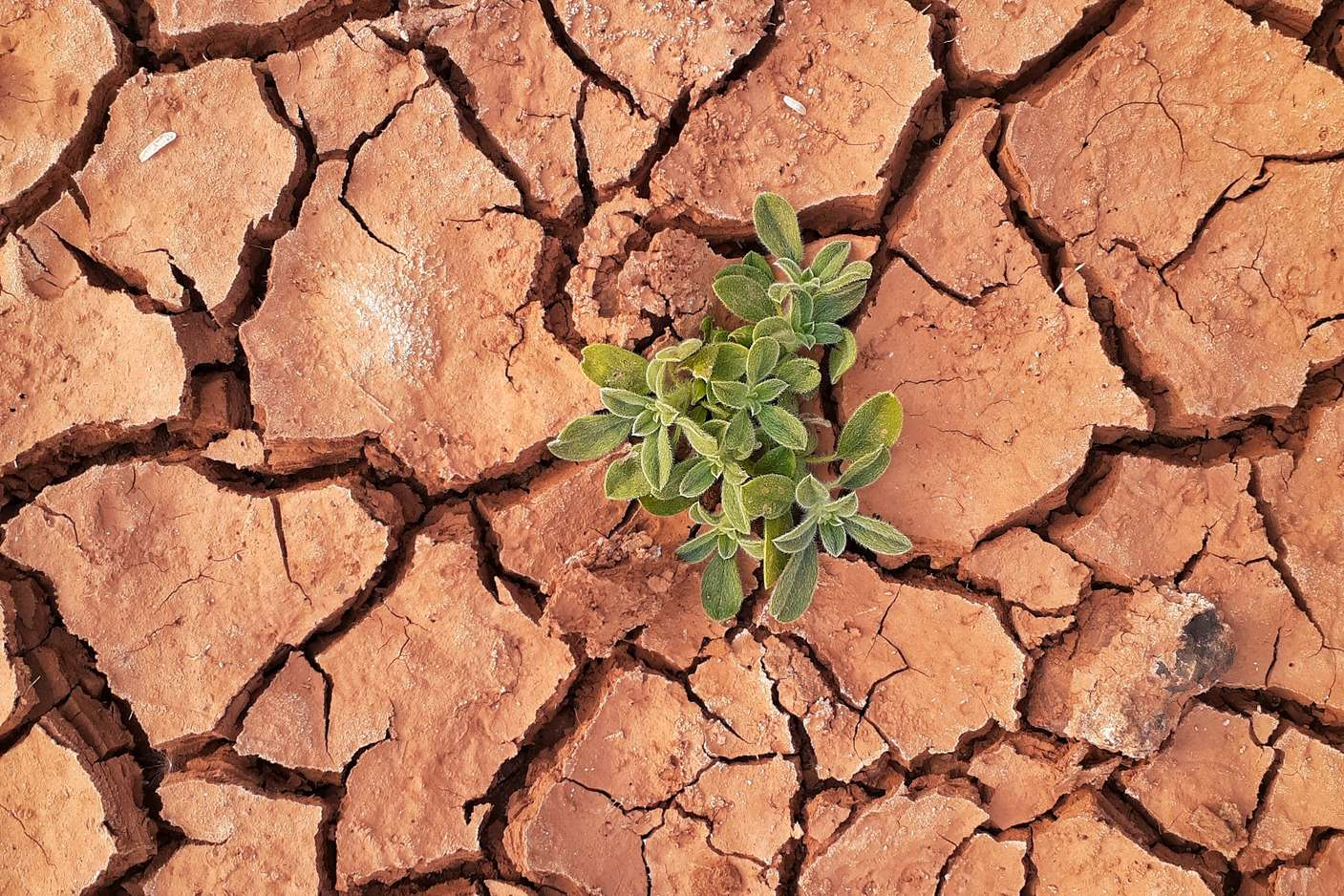 Droughts and the Post-2015 Agenda
