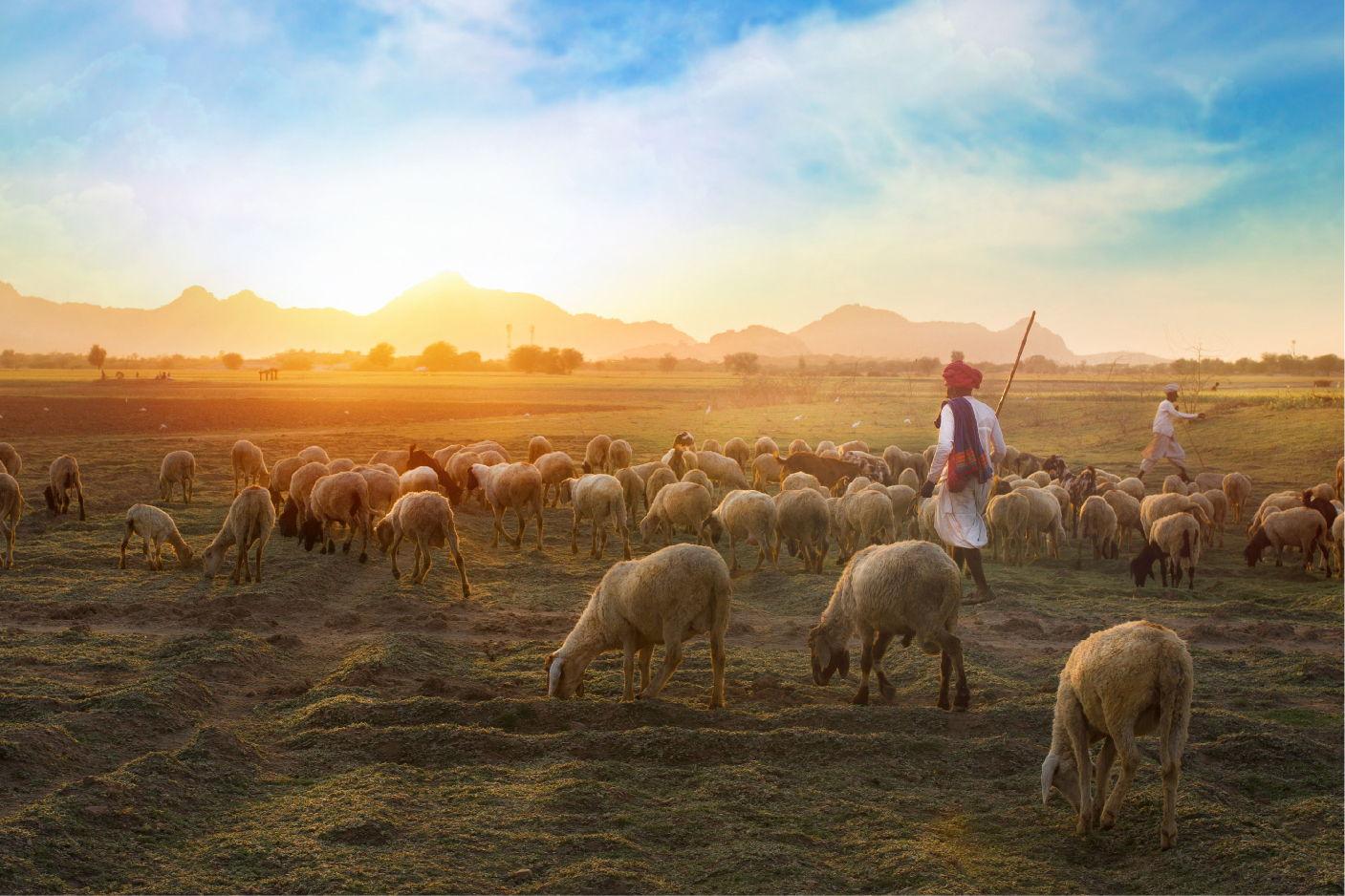 Drought impacts I: migration